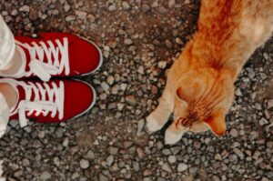 How To Travel With A Cat?